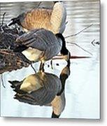 Reflective Geese Metal Print