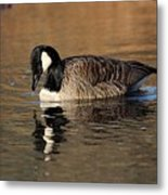 Reflective Moments Metal Print
