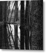 Reflective Tree Metal Print