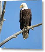 Regal Eagle Metal Print