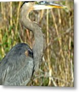 Regal Heron Metal Print