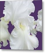 Regal Iris  Metal Print