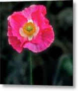 Regal Looking Poppy. Metal Print