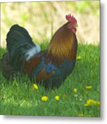 Regal Rooster Metal Print