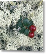 Reindeer Lichen And Low-bush Cranberry Metal Print