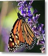 Relaxing Monarch Butterfly Metal Print