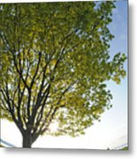 Relaxing Under A Tree Metal Print