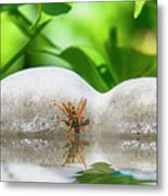 Reflected Little Stinger Taking A Sip 2 By Chris White Metal Print