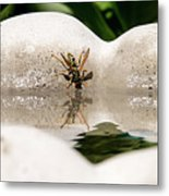 Reflected Little Stinger Taking A Sip By Chris White Metal Print