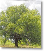 Remember The Trees Metal Print