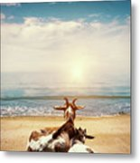 Remember This Day Metal Print by Wim Lanclus