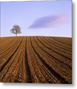 Remote Tree In A Ploughed Field Metal Print
