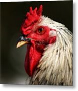 Renegade Rooster Metal Print