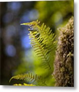 Renewal Ferns Metal Print by Mike Reid