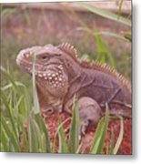 Reptile Land  Metal Print