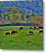 Rescue Horses Metal Print