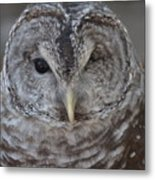 Rescue Owl Metal Print