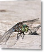 Rescued Dragonfly Metal Print