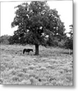 Respite In Black And White Metal Print