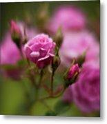 Resplendent Roses Metal Print