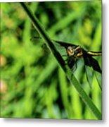 Resting Alert Dragonfly Metal Print