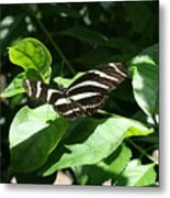 Resting - Black And White Butterfly Metal Print