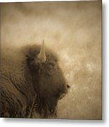 Resting Buffalo Metal Print