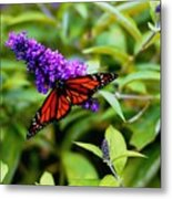 Resting Butterfly 2 Metal Print