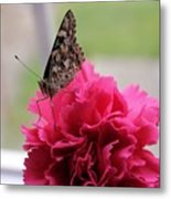 Resting Butterfly Metal Print