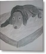 Resting Dog Metal Print