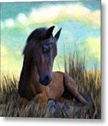 Resting Foal Metal Print