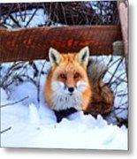 Resting Fox Metal Print