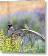 Resting In The Garden Metal Print