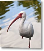 Resting On One Leg Metal Print