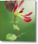 Resting On The Pink Plant Metal Print