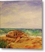 Resting Sea Turtle Metal Print