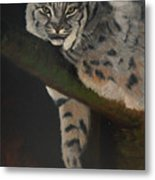 Resting Up High Metal Print