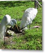 Resting Wood Stork And White Egret Metal Print