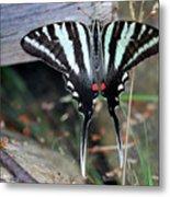 Resting Zebra Swallowtail Butterfly Metal Print