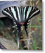 Resting Zebra Swallowtail Butterfly Square Metal Print