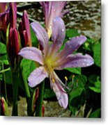 Resurrection Flower Metal Print