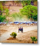 Returning From Pasture 13 Metal Print
