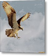 Returning To The Nest 01 Metal Print