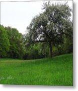 Rhineland-palatinate Summer Meadow Metal Print