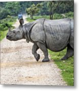 Rhino Crossing Metal Print