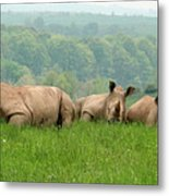 Rhino Heard Panarama Metal Print