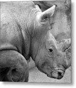Rhino Profile Metal Print