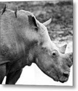 Rhino With Passengers Metal Print