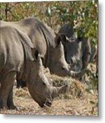 Rhinos,  Zambia Metal Print