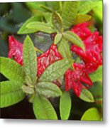 Rhodendron In 3d Metal Print